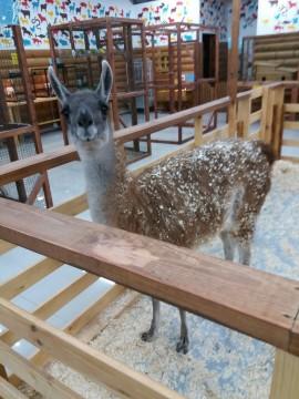 Контактный зоопарк в Охта-Молл
