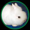 Ангорские декоративные кролики